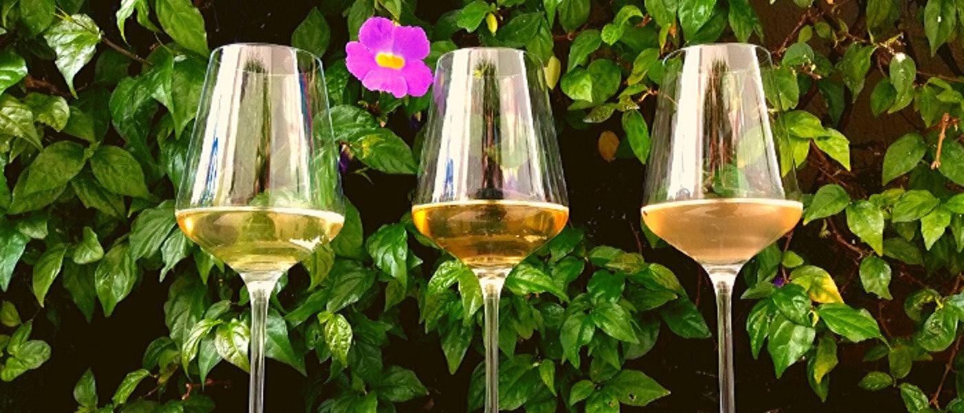 Verão: 10 Opções de Vinho Branco e Vinho Rosé para Beber no Calor