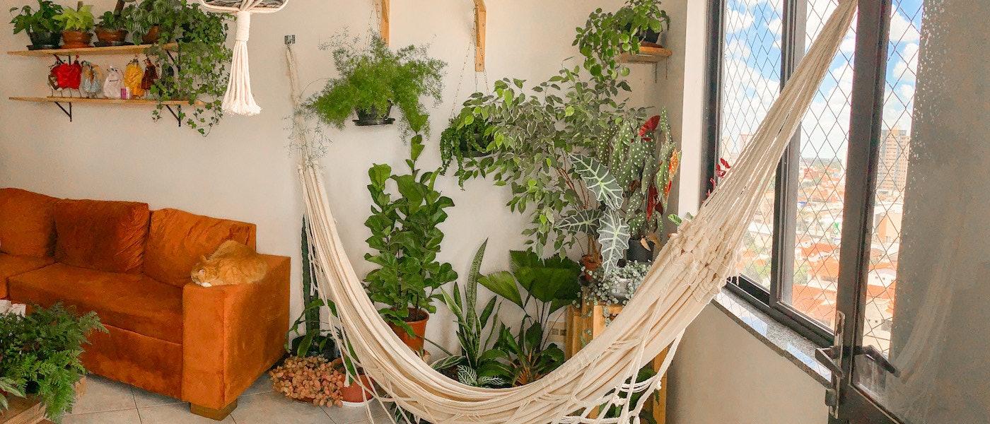 Urban Jungle: Veja 10 Itens para Cultivar Plantas em Apartamento
