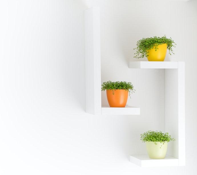 Escolha o Tamanho do Vaso Autoirrigável com Base no Seu Espaço