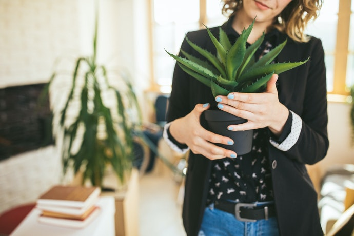 Escolha o Cachepô pelo Diâmetro do Vaso de Flor
