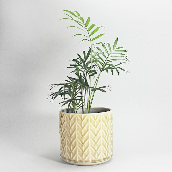 Cachepôs de Cerâmica: Sofisticados, Ideais para Ambientes Internos