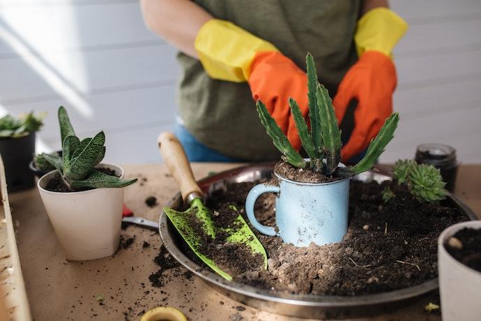 O Volume do Vaso Determina o Porte das Plantas Que Podem Ser Colocadas