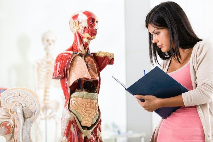 Como Estudar Anatomia e Fisiologia Humana?
