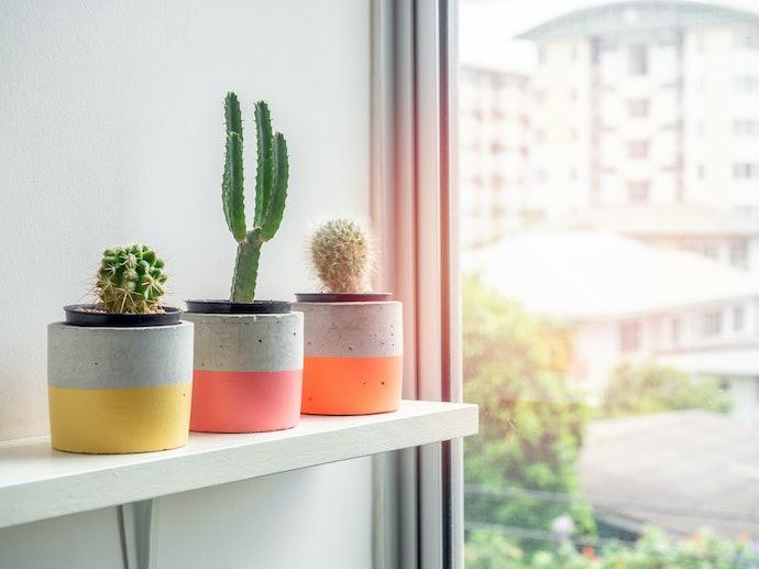 Qual a Diferença Entre Vaso de Flor e Cachepot?