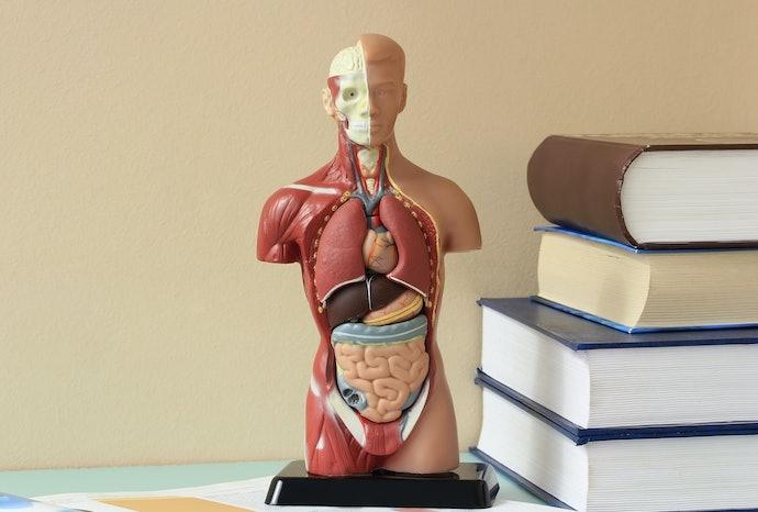 Observe a Quantidade de Páginas do Livro de Anatomia