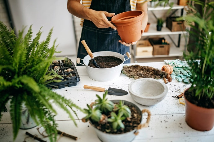 Como Plantar no Vaso Autoirrigável