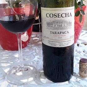 Vinho Bom e Barato: 6 Rótulos de até R$100 Indicados por Sommeliers e Enófilos 5